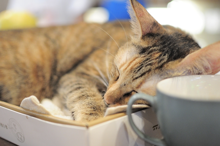simple-coffee-the-lovely-cat