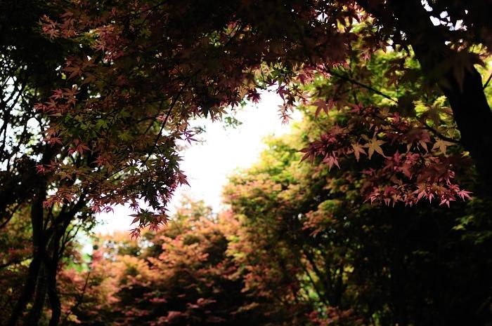taipei-auwanta-maple-leaves