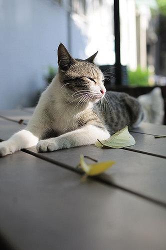 ntut-cat-winter-summer-2